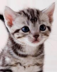 帅气狸花猫